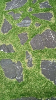 Free stock photo of nature, abstract, grass, stones