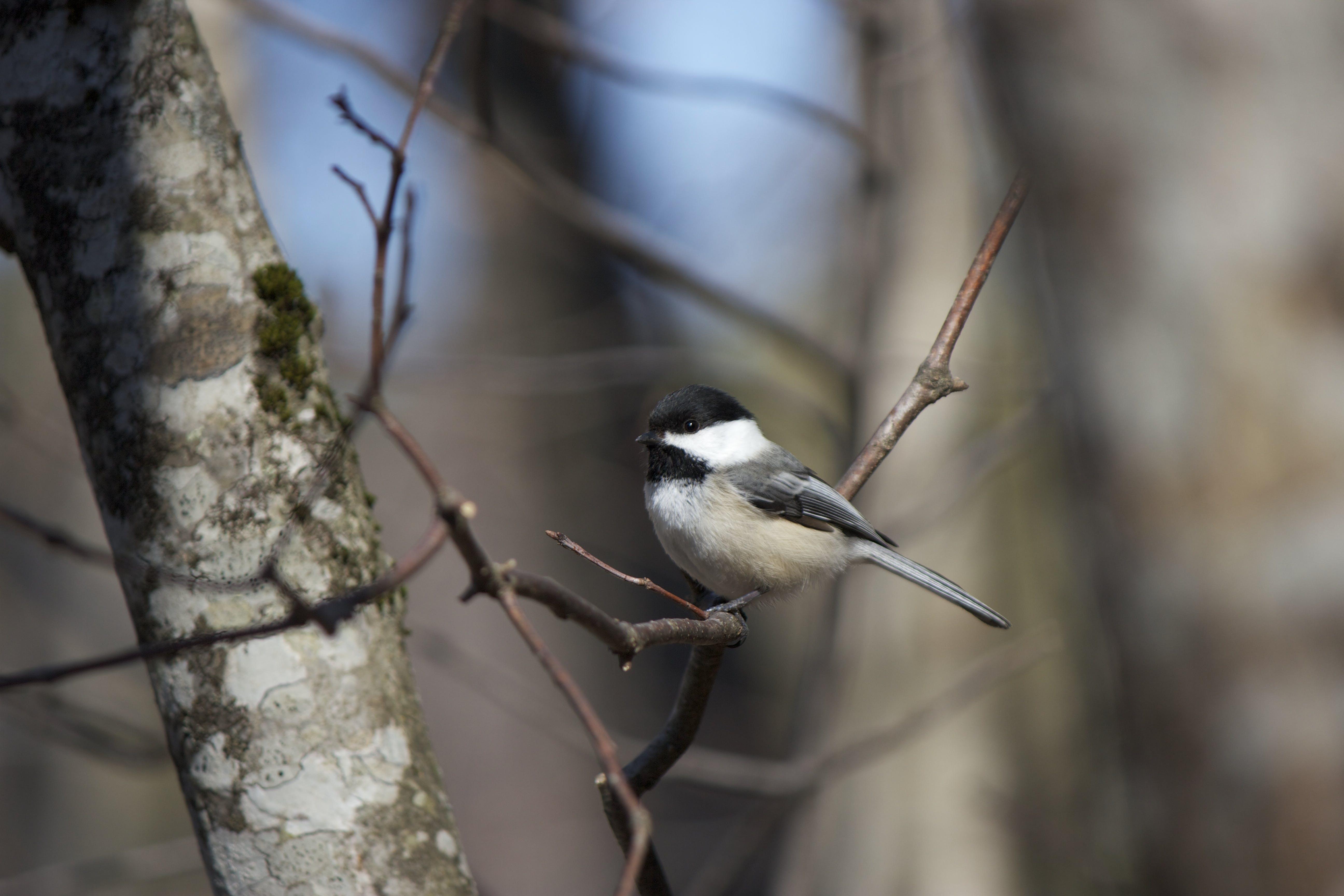 Bird Perch on Tree Trunks