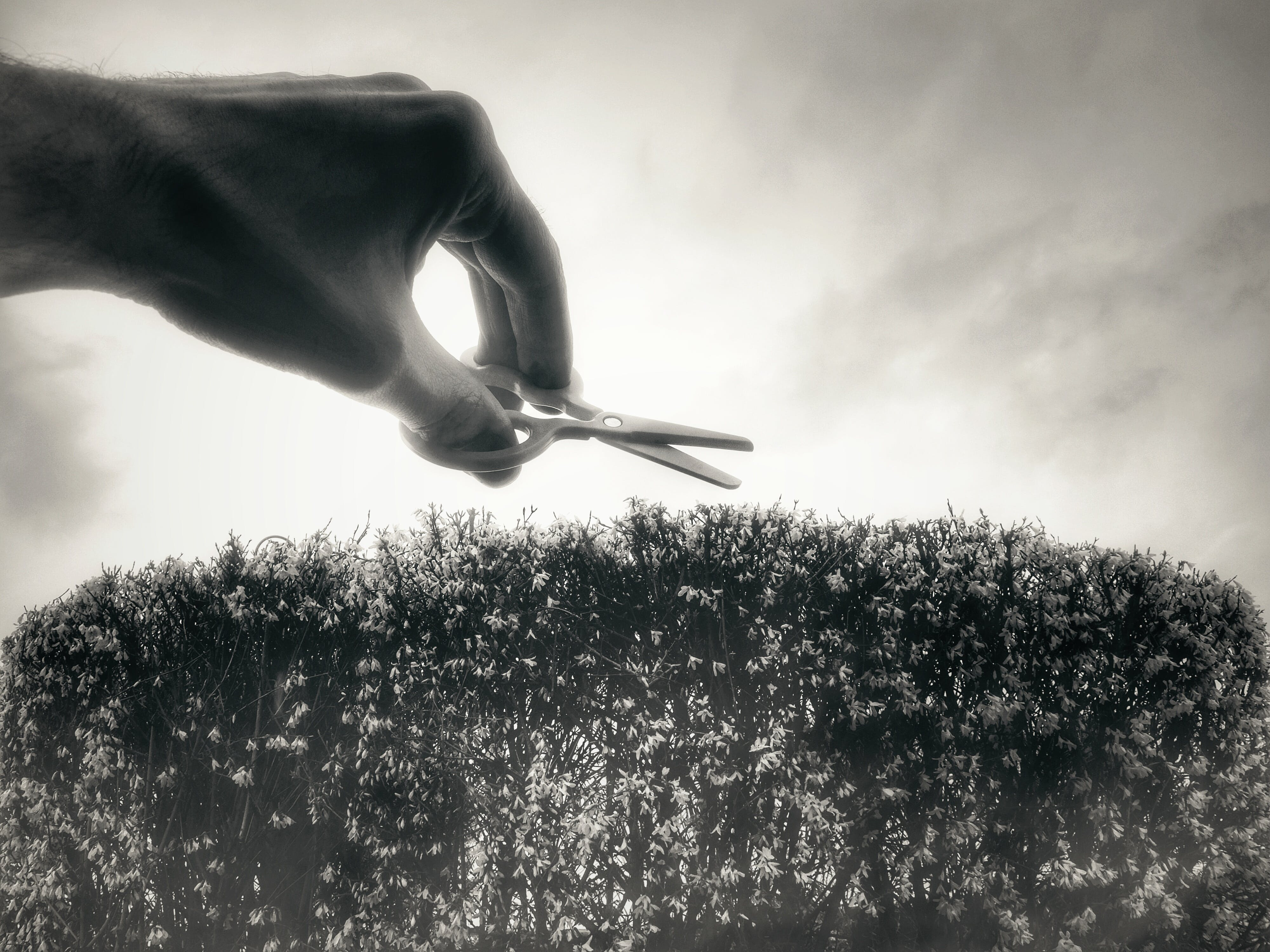 Free stock photo of sky, hand, plant, spring