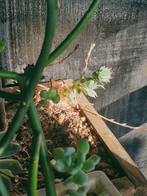 Free stock photo of light, lotus, morning