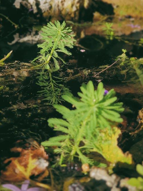 Free stock photo of green, light, morning