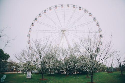 Fotos de stock gratuitas de al aire libre, árbol, carnaval