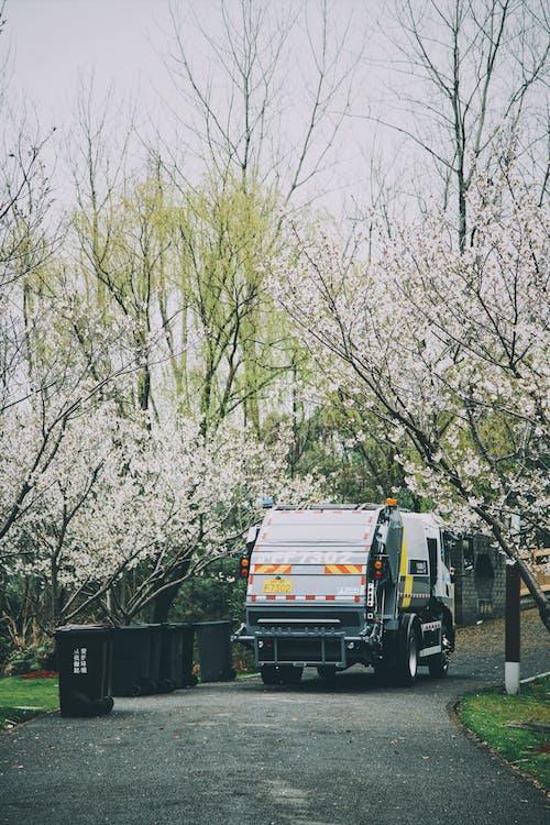 Fotos de stock gratuitas de al aire libre, árbol, caer