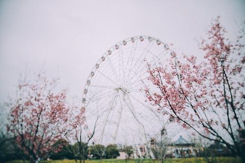 Fotos de stock gratuitas de al aire libre, amanecer, árbol