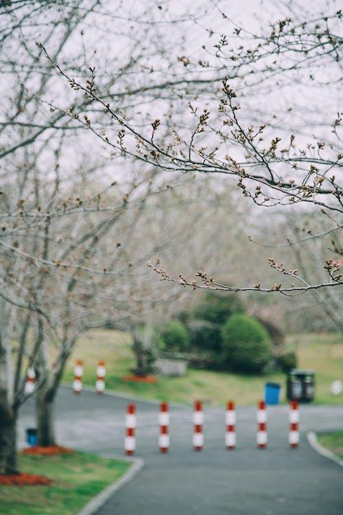 Fotos de stock gratuitas de cerezos en flor, flor de cerezo, floración de los cerezos