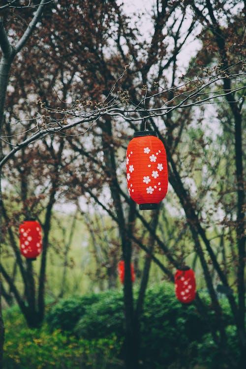 Fotos de stock gratuitas de al aire libre, amor, árbol