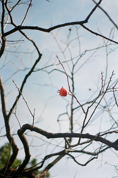 Free stock photo of 35mm film, alone, film