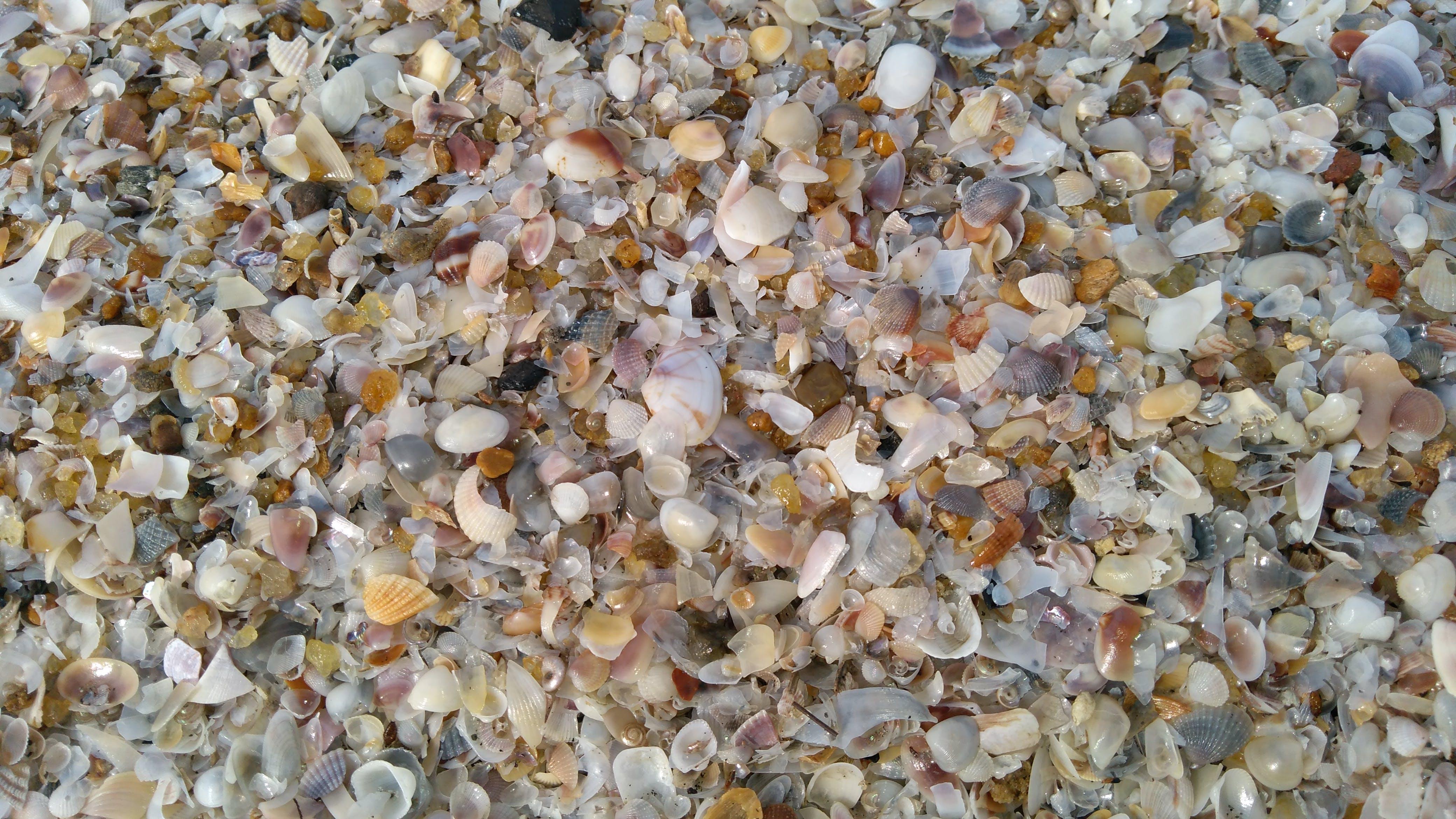 Free stock photo of beach, broken, sea shells