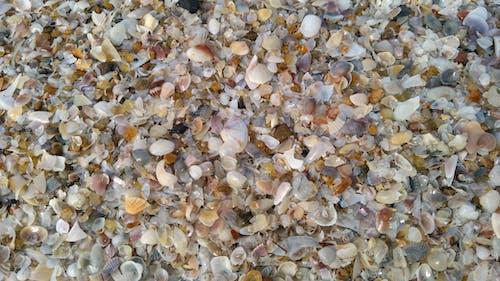 Fotos de stock gratuitas de conchas marinas, playa, roto