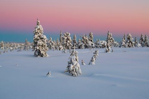 Безкоштовне стокове фото на тему «вічнозелений, гора, Деревина»