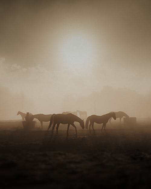 Silhouette of Horses on Field during Sunset