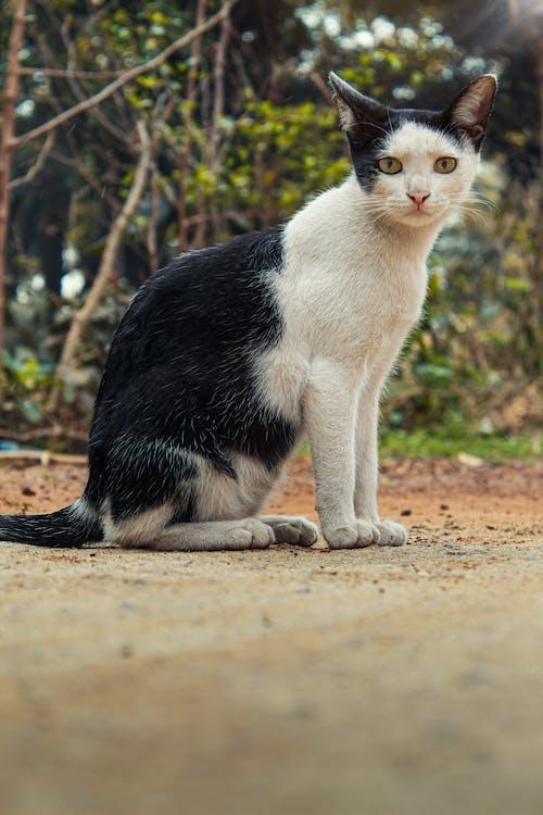 Free stock photo of animal photography, cat