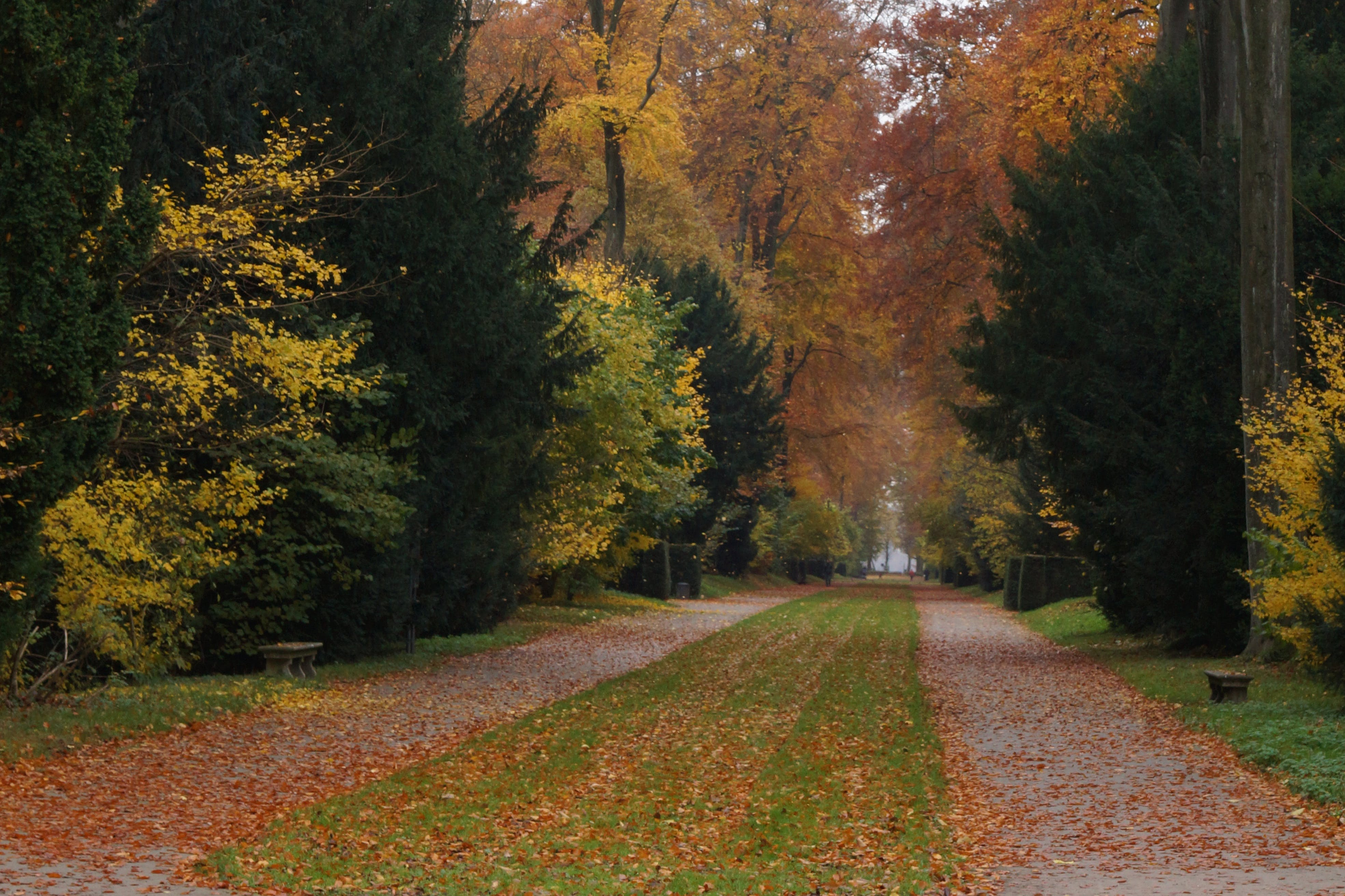 Free stock photo of autumn, forest path