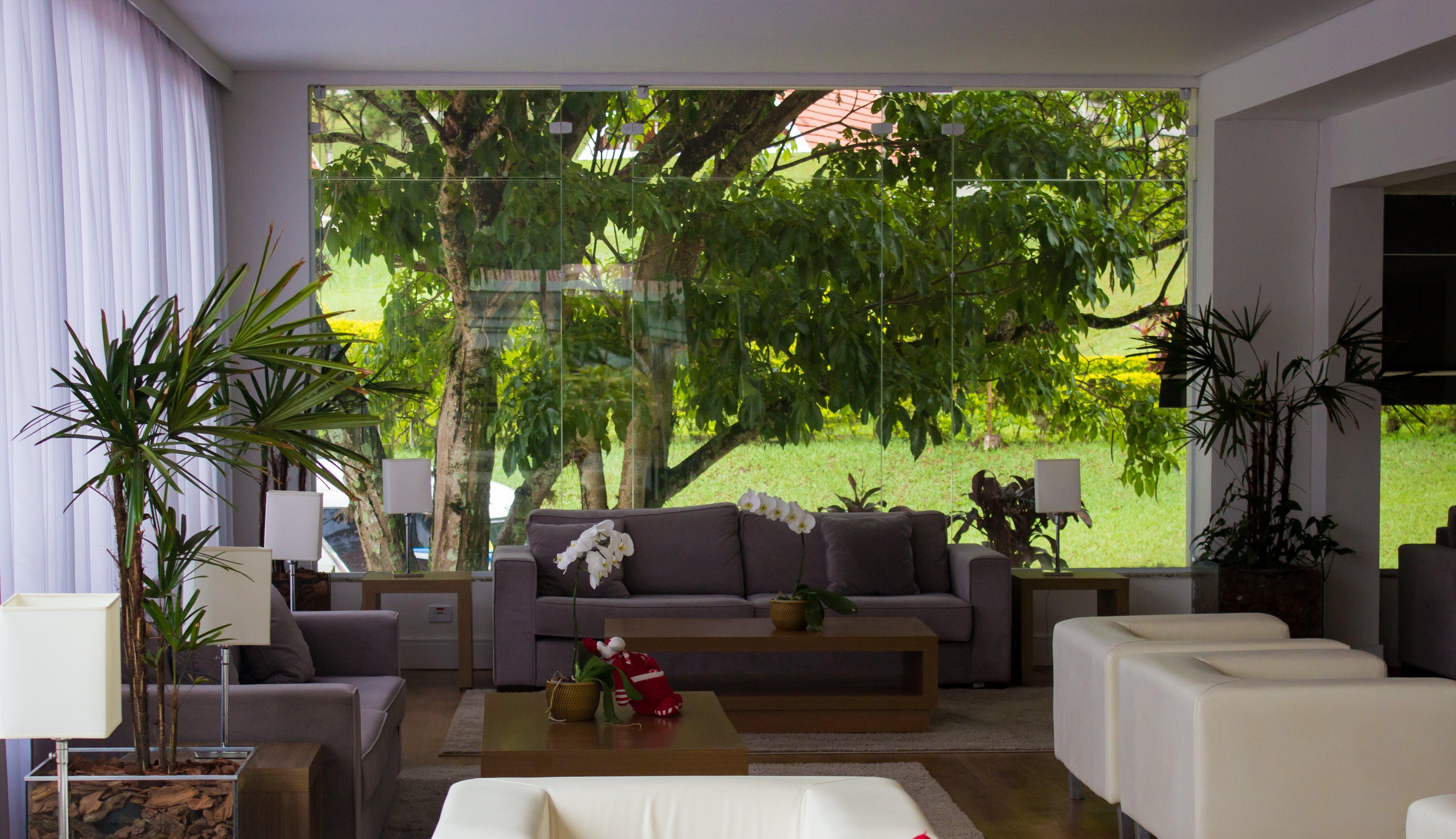 Free stock photo of furniture, indoor, nature