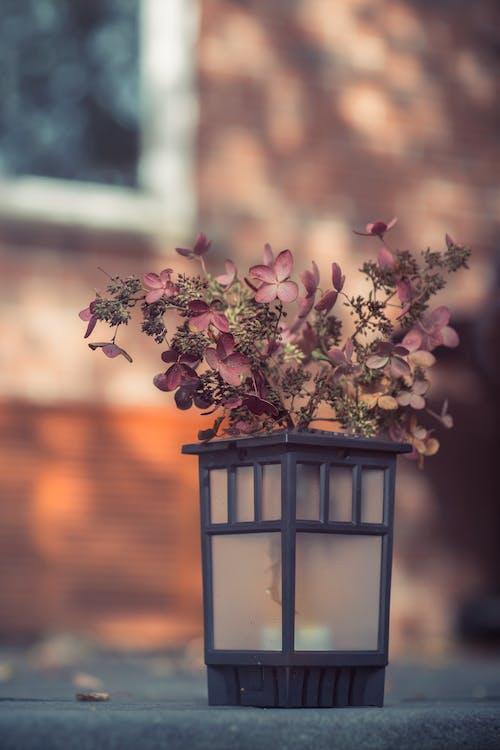 Foto stok gratis Arsitektur, berwarna merah muda, bunga