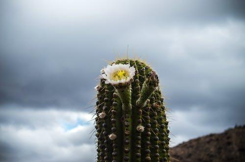 Fotobanka sbezplatnými fotkami na tému denné svetlo, detailný záber, farby, flóra