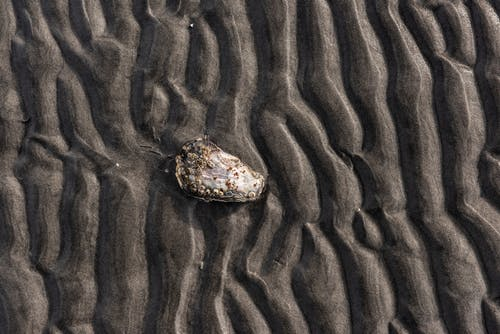 Brown and Black Stone on Brown Sand