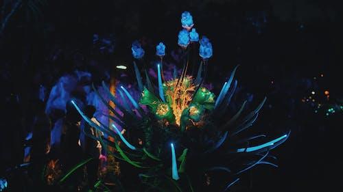 Gratis lagerfoto af nat, neon, neon blomster