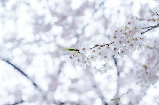 Kostenloses Stock Foto zu natur, blumen, sonne, winter