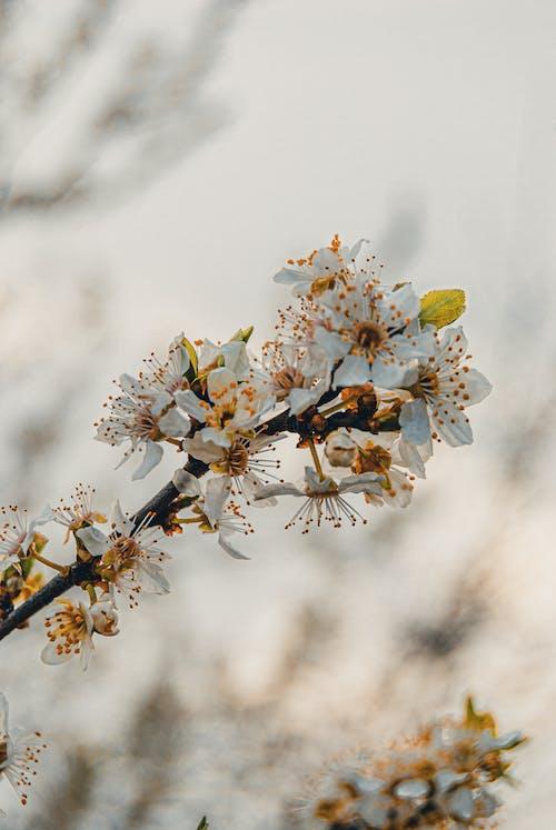 Безкоштовне стокове фото на тему «білий, вертикальні постріл, Весна»