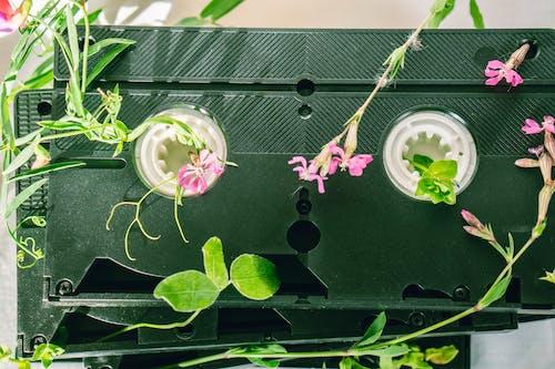 Immagine gratuita di cassetta, colpo del primo piano, elettronica