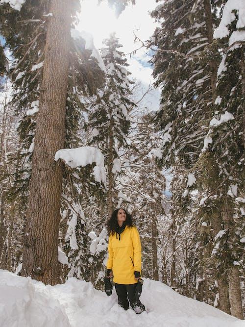 下坡, 下雪的, 似雪 的 免费素材图片