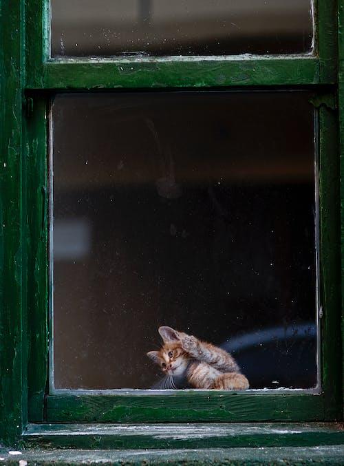 Kostnadsfri bild av däggdjur, djur, fönster
