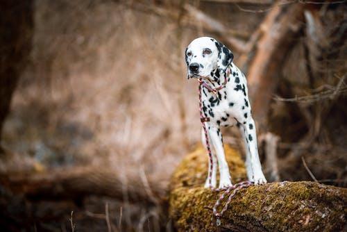 Fotos de stock gratuitas de al aire libre, animal, bosque nuboso