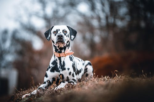 Fotos de stock gratuitas de al aire libre, animal, blanco y negro