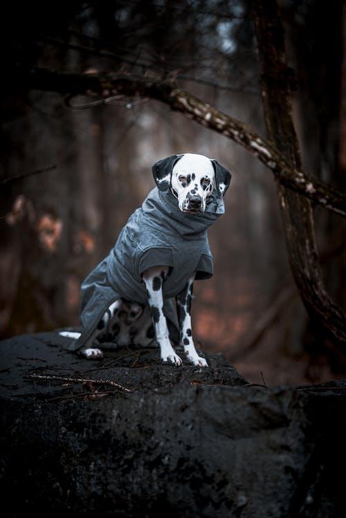 Fotos de stock gratuitas de amante de los perros, animal, bosque de otoño