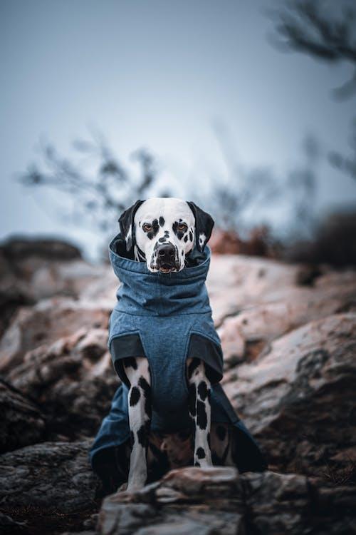 Fotos de stock gratuitas de adulto, al aire libre, animal