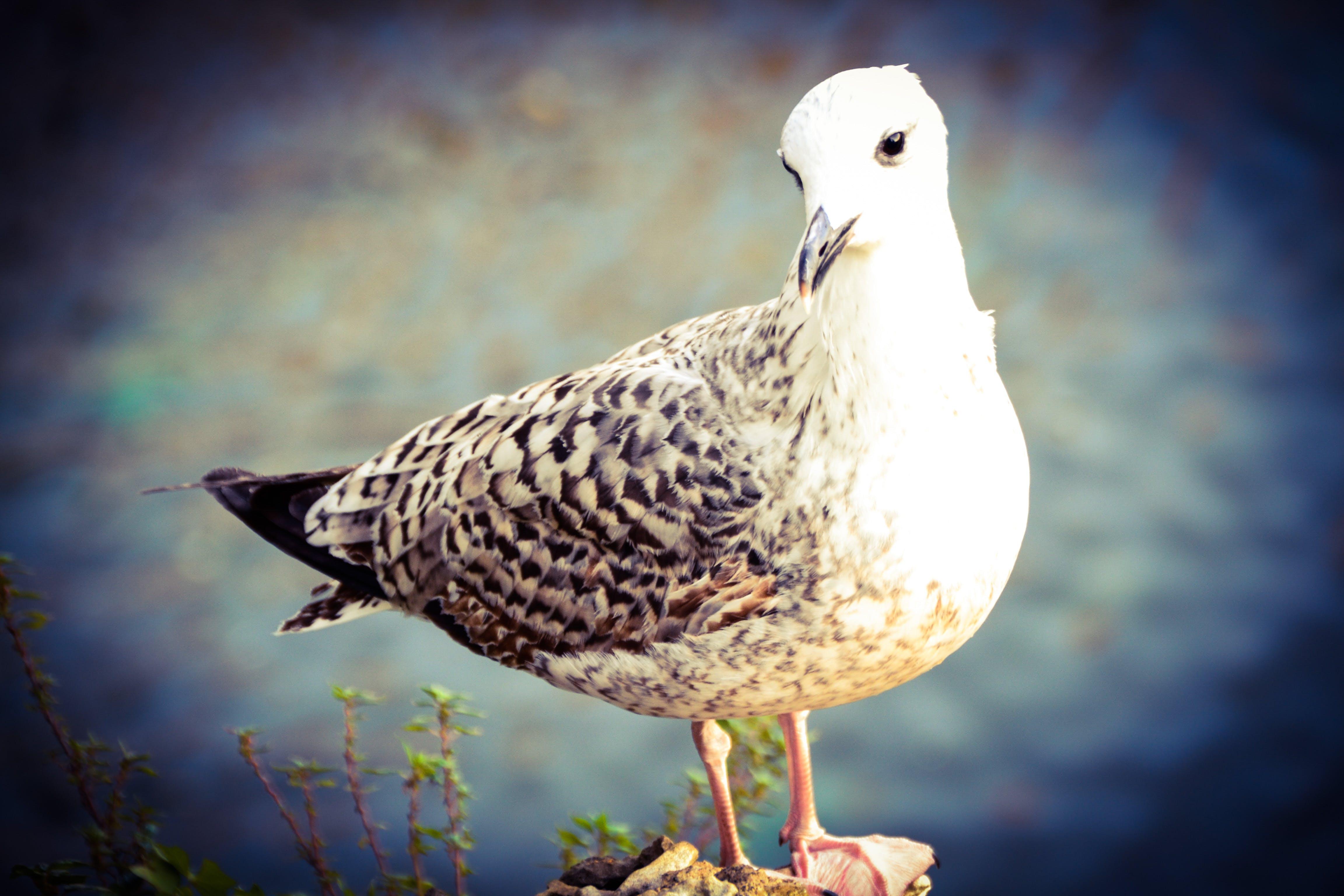 Free stock photo of bird, cool, lake, seagull