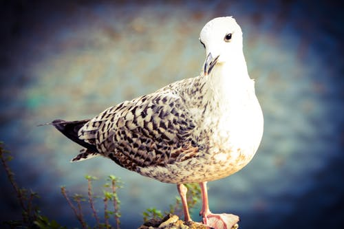 Free stock photo of cool, seagull