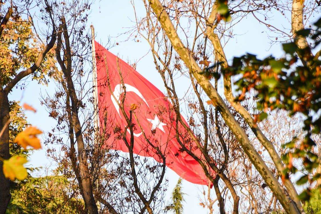 Free stock photo of blue sky, trees, turkey