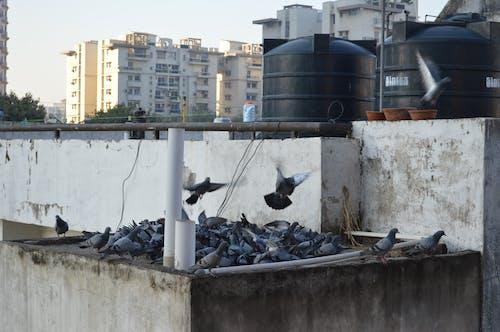 Foto d'estoc gratuïta de aus rapinyaires, bandada d'ocells, Ocells del paradís