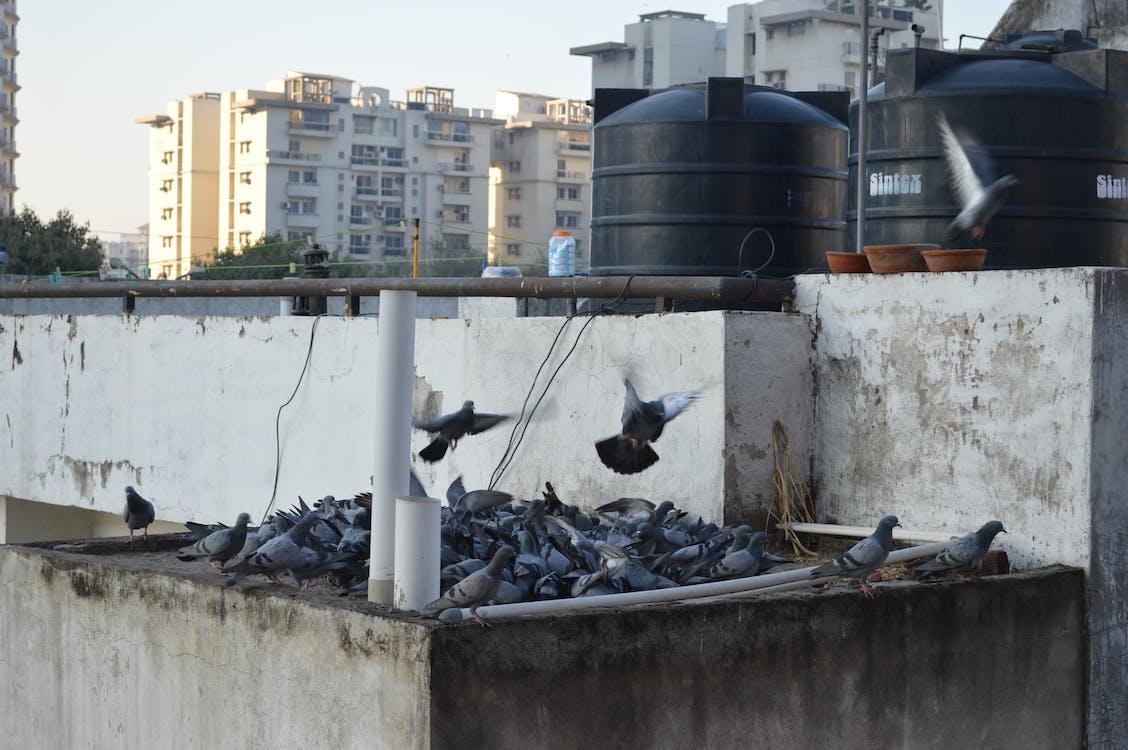 Kostenloses Stock Foto zu paradiesvögel, raubvögel, vogelschwarm