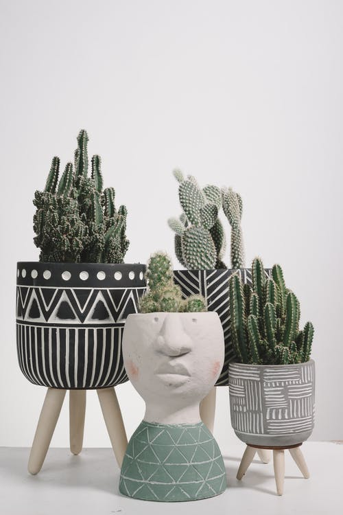 Green Cactus Plant on White and Black Pot