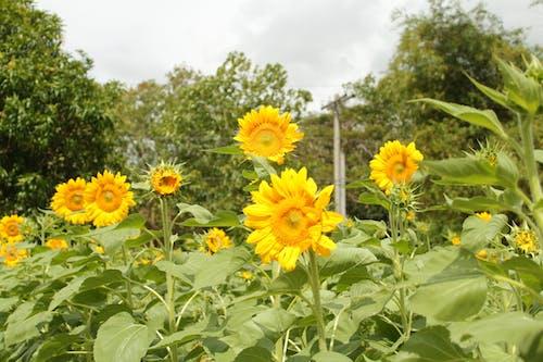 Free stock photo of farm, field, flower