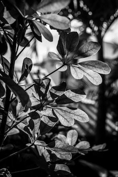 Free stock photo of nature, réunion, black and-white