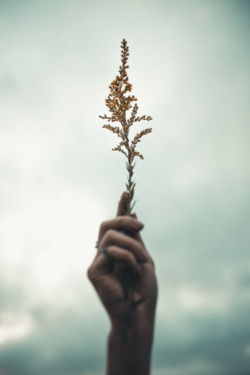 Person Holding Brown and Green Plant