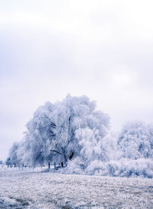 White Trees Under White Sky