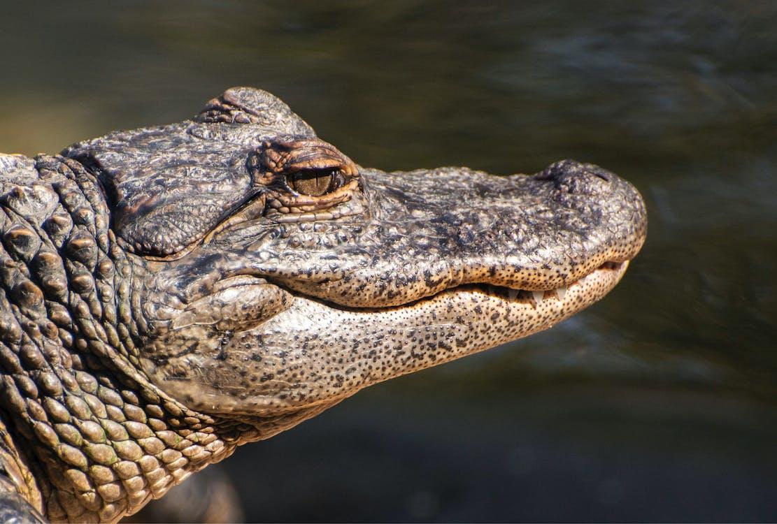 Foto profissional grátis de água, ameaça, animais selvagens