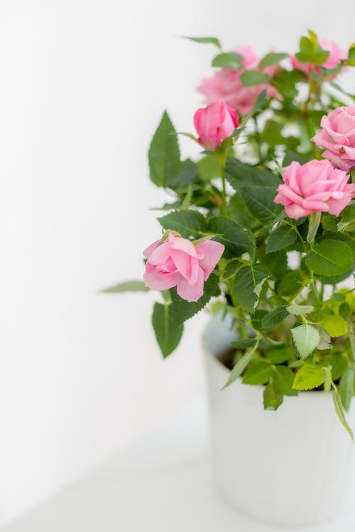 Fotos de stock gratuitas de brillante, flor de primavera, floreciente