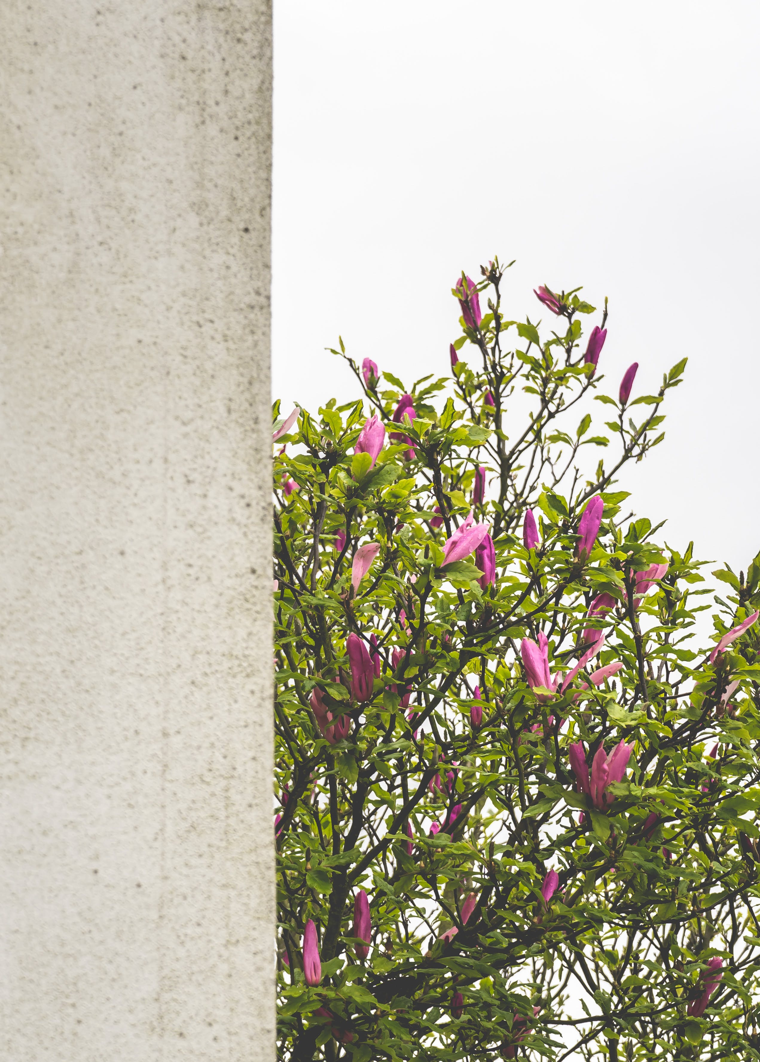 Free stock photo of weather, flowers, spring, faded