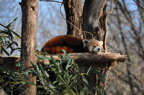 Brown and White Fox on Brown Tree Branch