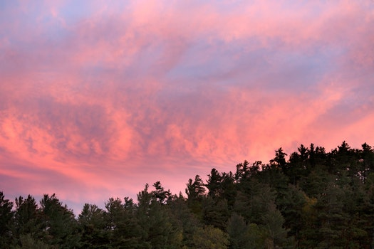 Green Forest Trees Under Pink and Blue Sky during Sunset