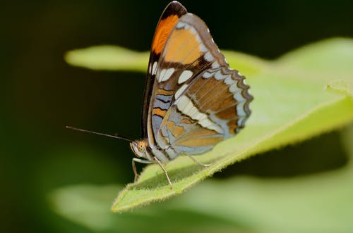 Close-Up Shot of Brown and Yellow Butterfly on Green Leaf