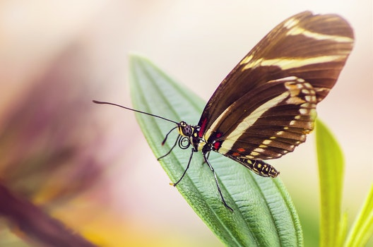 Black Yellow Butterfly on Green Leaf Plant during Daytime