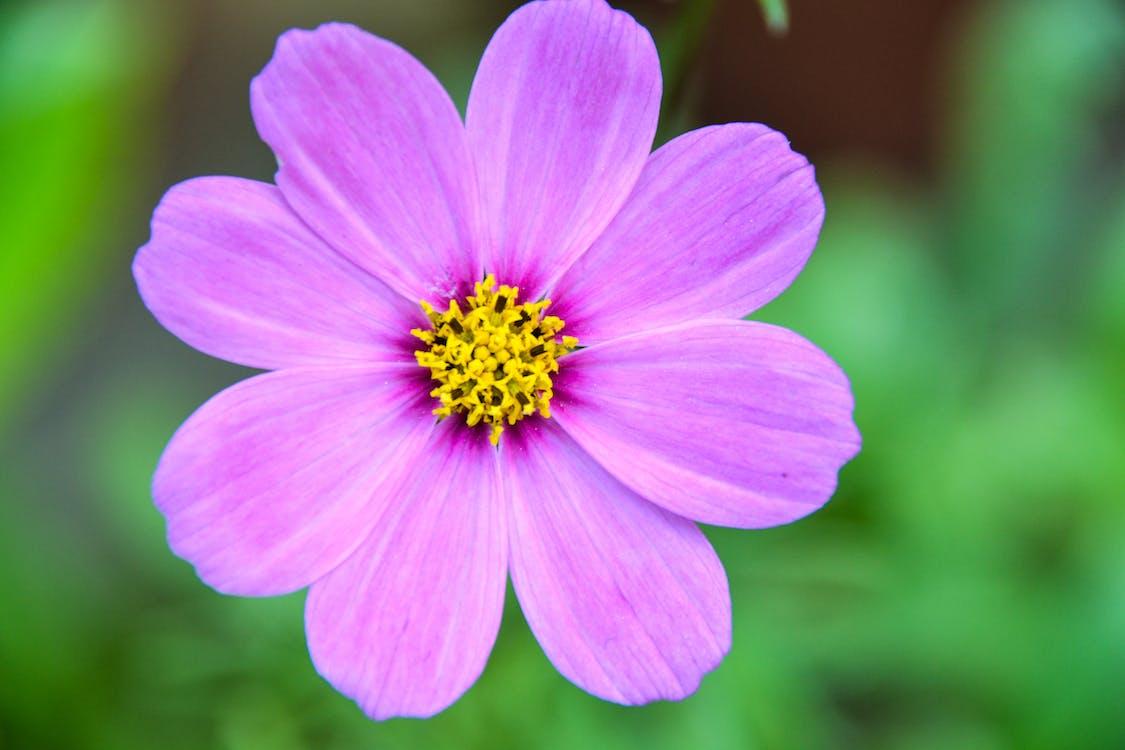 Free stock photo of beautiful flowers, flower, green
