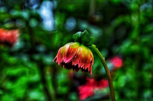 Fotos de stock gratuitas de amor, bonita, bonito, cerezos en flor
